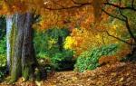 woudreus in de herfst